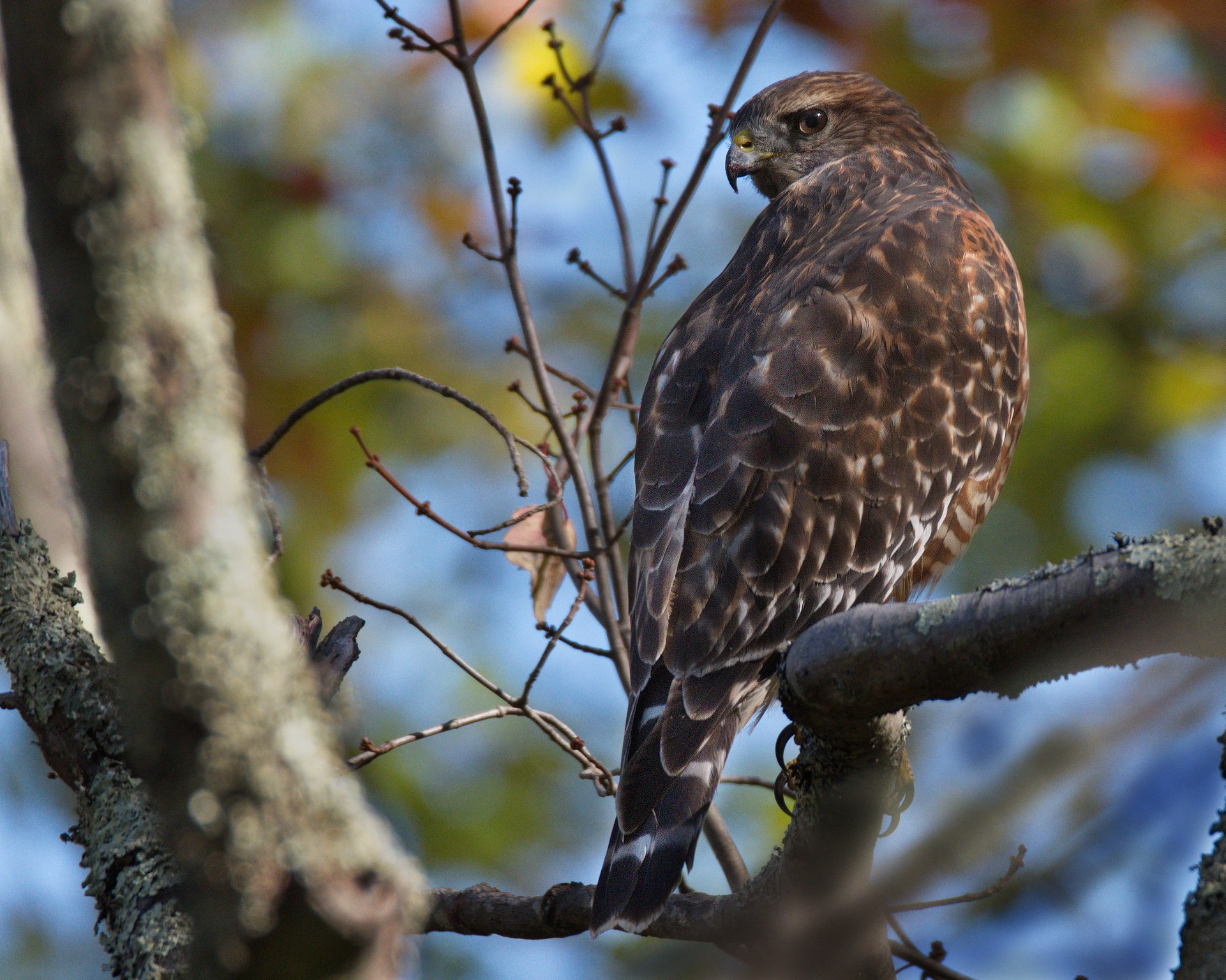 Hawk - Taken Near Milford, PA by Buckmaster