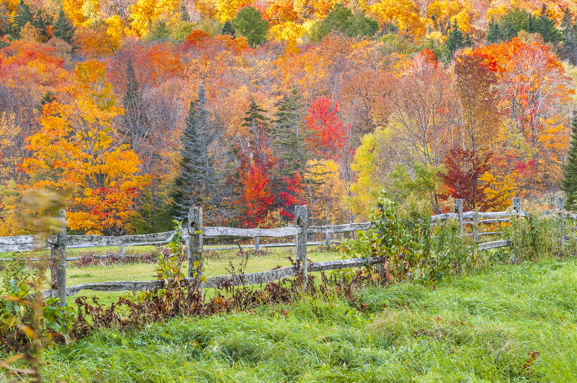 Fence in Foliage - Vibrant Colors of Autumn in Vermont by Buckmaster