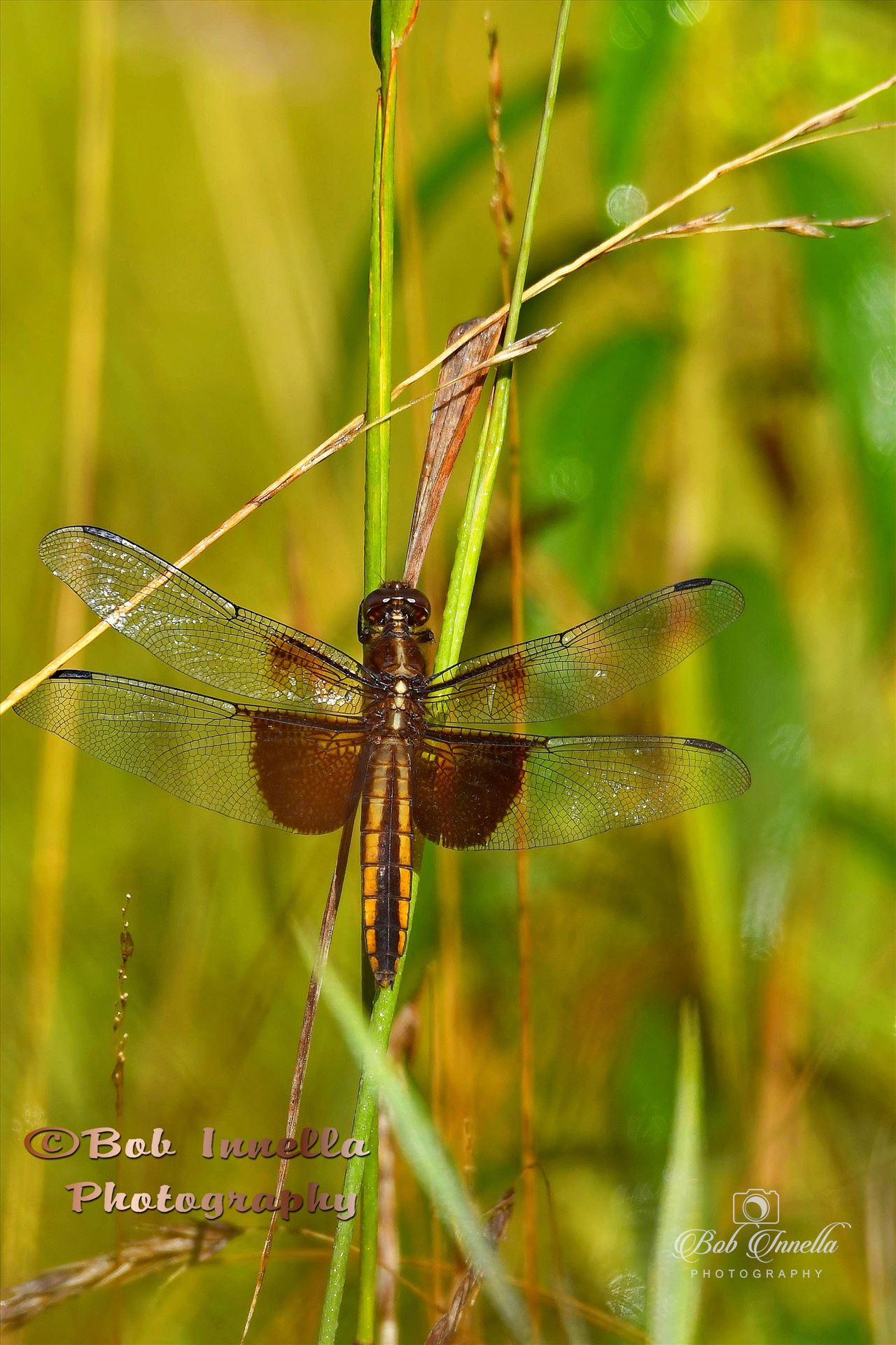 Dragon Fly - Taken In Hawley Pa by Buckmaster
